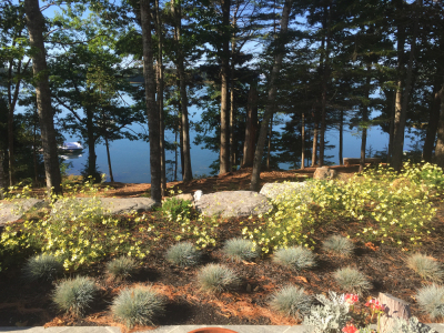 A view of the ocean is complemented by low-growing blue grasses and yellow blooms.