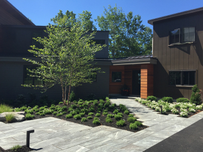 Contemporary mass plantings create a bold aesthetic.